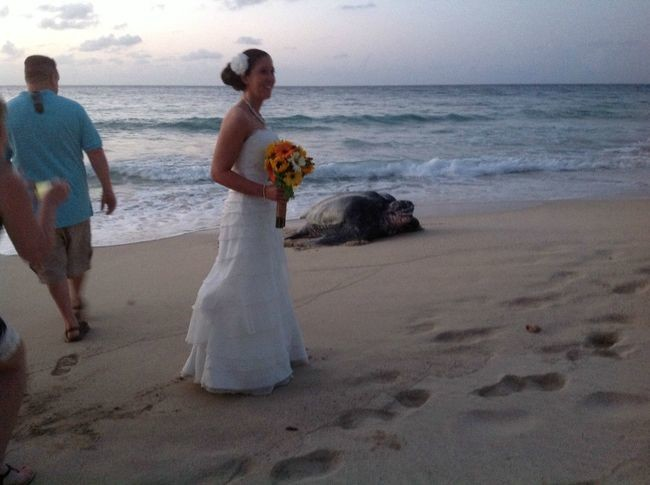 This is his beach so yeah, the bride must give way