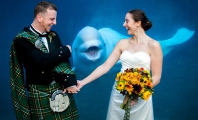 These 17 Wedding Photobombs By Animals Are So Hilarious! # 14 Is So Cute!